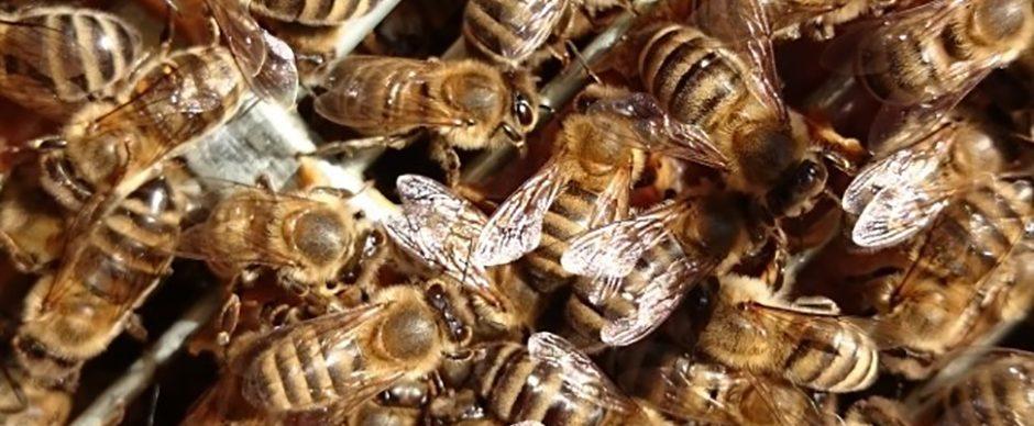 Laatste honingoogst