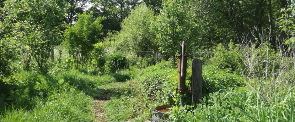 Het voedselbos in mei