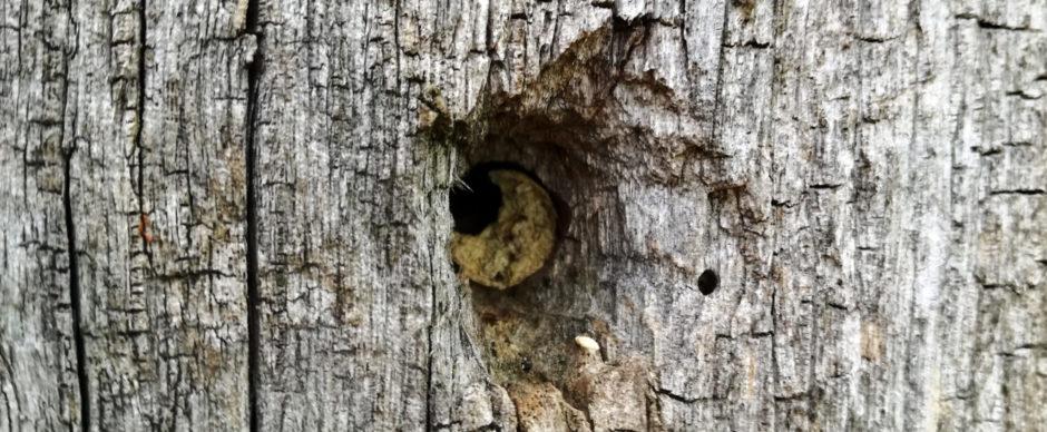 Metselbijen